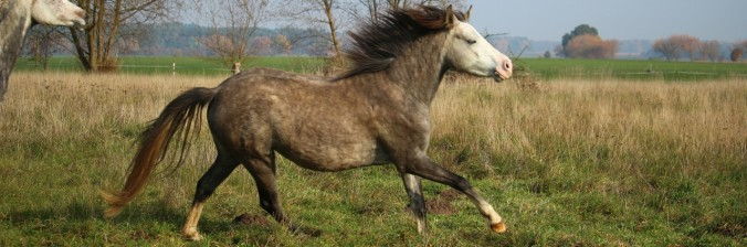 cropped-horse-1012683_1920.jpg
