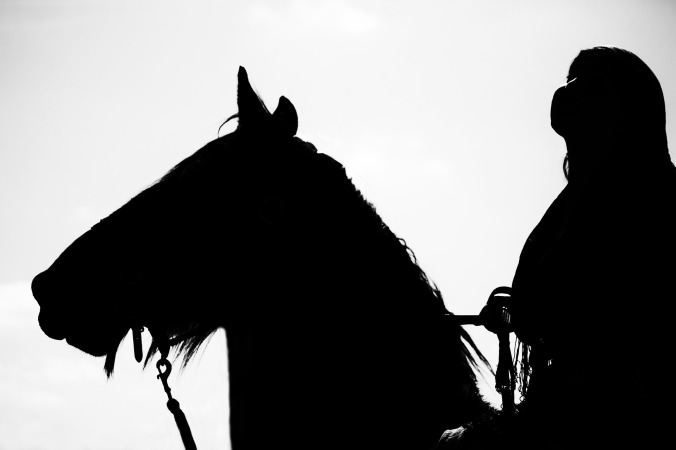 horse-1144027_1920
